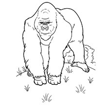 gorilla trekking wild life giraffe and elephant coloring pages