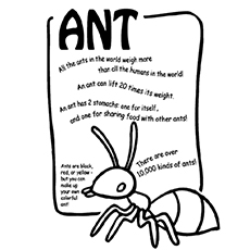 Top 25 Free Printable Ants Coloring Pages Online