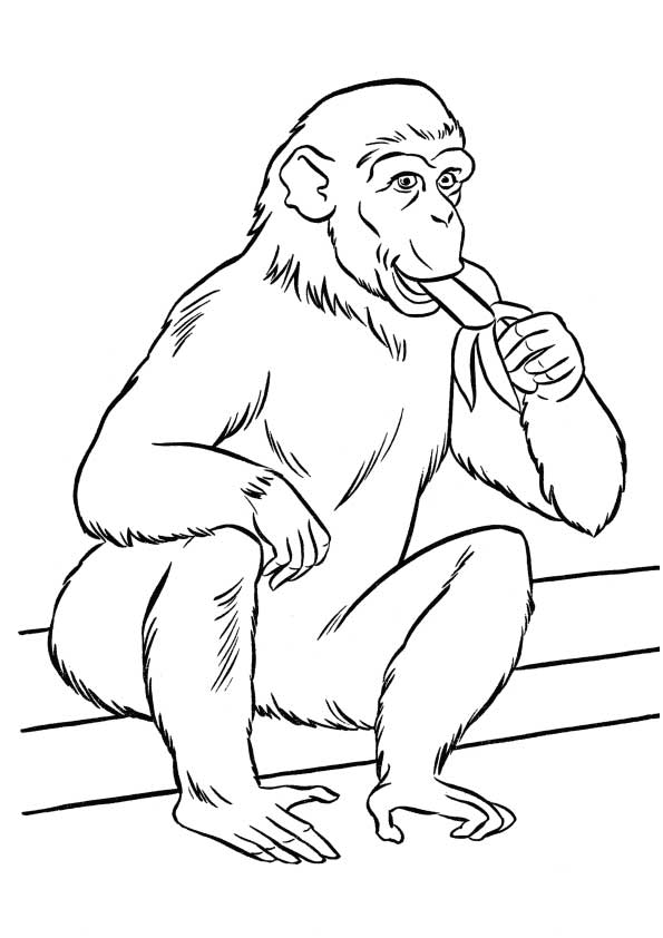 The-monkey-eating-banana