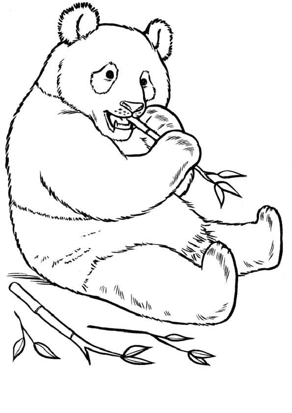 The-panda-bear