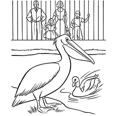 The-pelican-and-duck-in-the-zoo