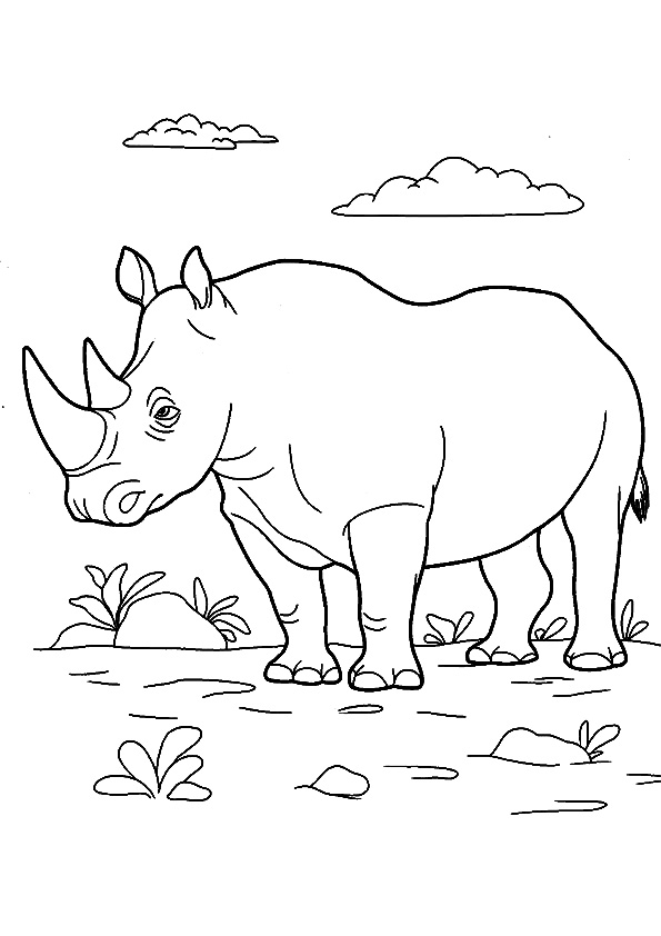 The-rinoceronte