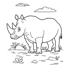 Rhinoceros Coloring Pages Wild Animal