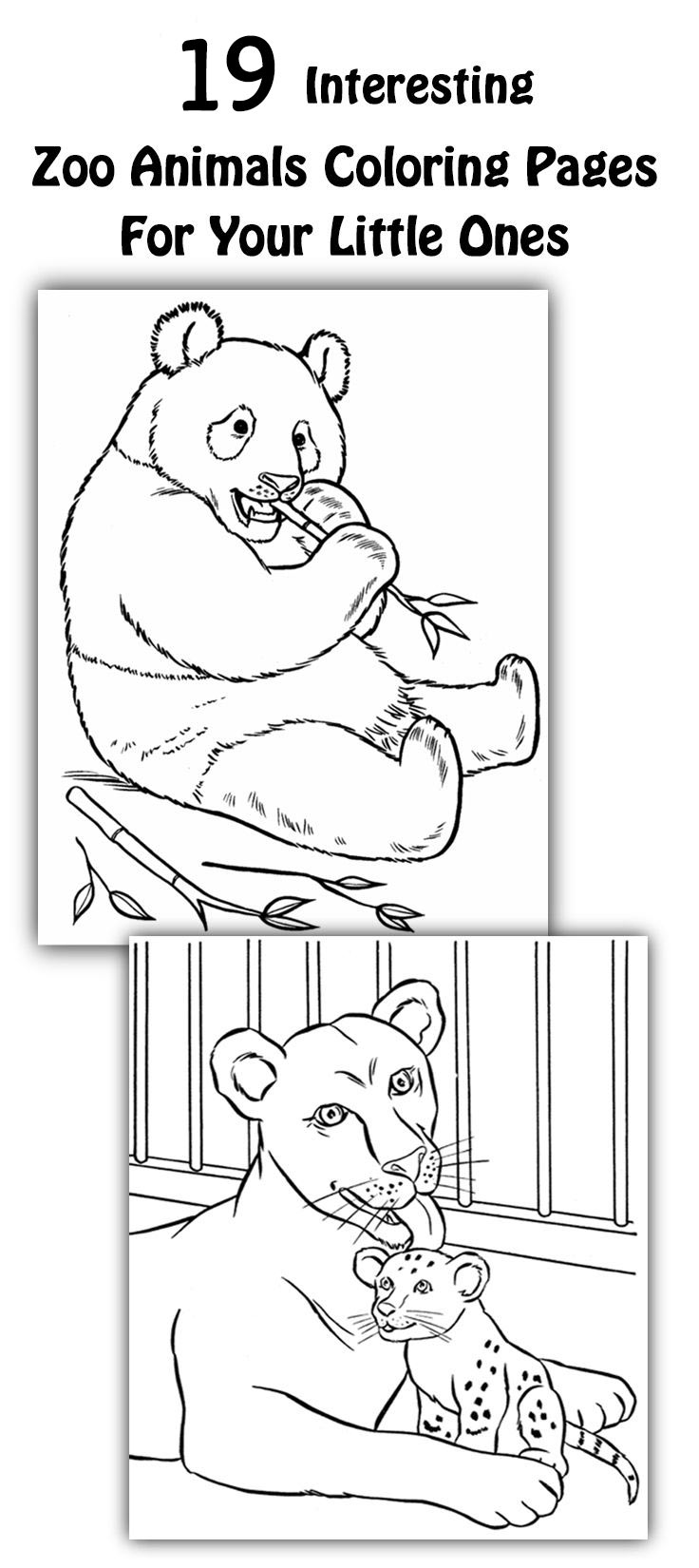Free coloring pictures zoo animals - Free Coloring Pictures Zoo Animals 38
