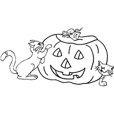 a-enlightened-pumpkin-and-cats1