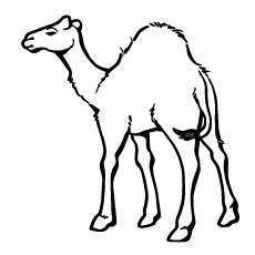 camel preschool coloring page - Preschool Coloring Pages