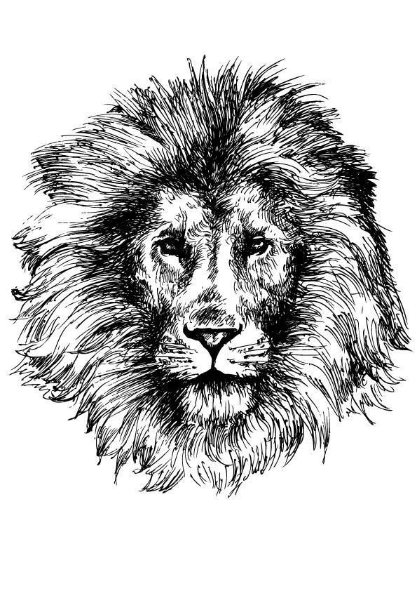 hand-drawn-lion
