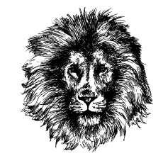 Hand Drawn Lion Coloring Pages