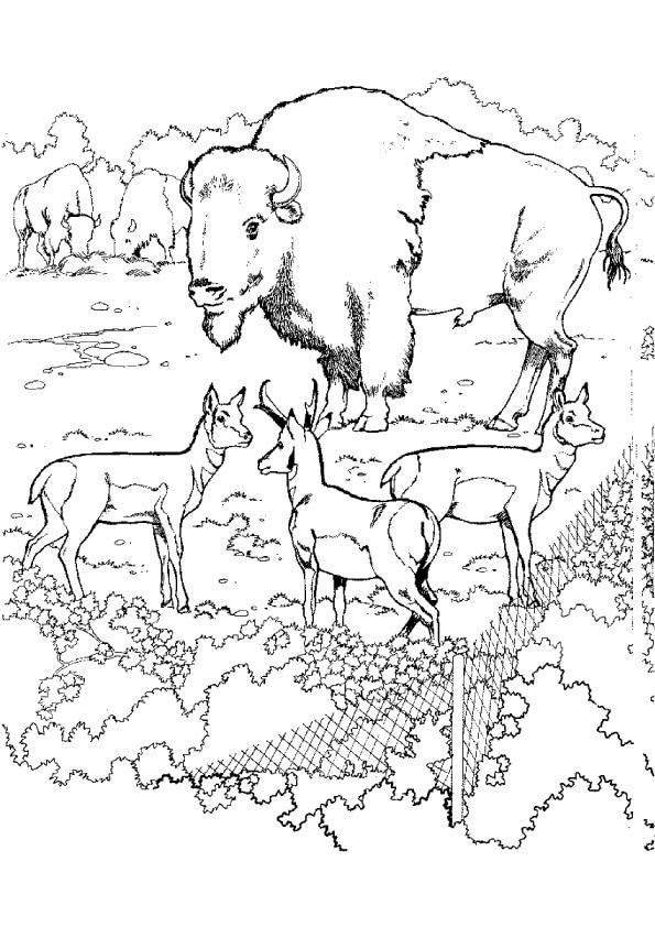 ox-animal-with-dear