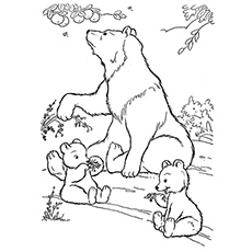 wild life bear coloring pages - Coloring Pages Animals Printable