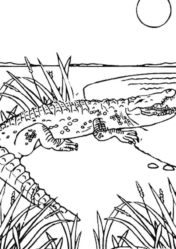 the-crocodail-color-page