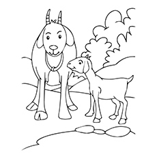 Cute Goat Coloring Small Coloring Pages