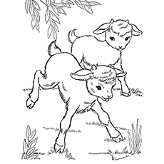 Cute Goat Coloring two Pages