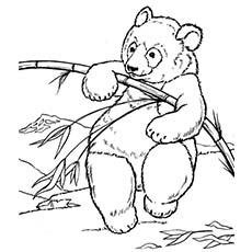 giant panda coloring page giant panda bear coloring pages