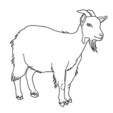 goat coloring pages sta - Coloring Page Goat