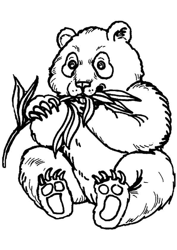 A-Panda-Bear-Coloring-eat