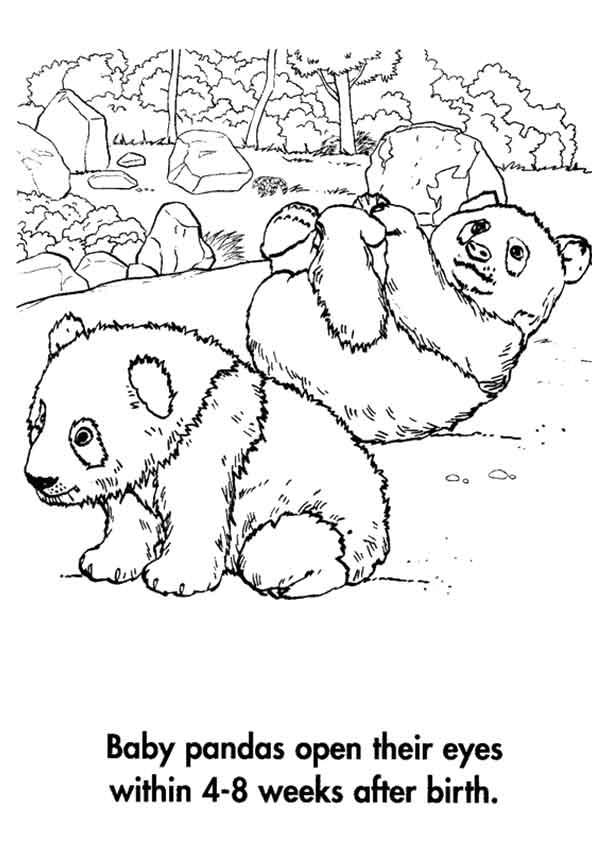 A-Planet-Earth_Panda_Babies