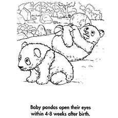 A Panda Bear Coloring Stand Planet Earth Babies