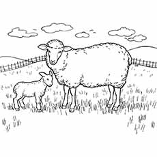 A Sheep Coloring Pictures