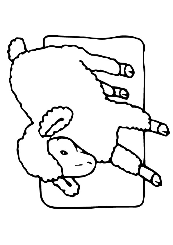 A-Sheep-Coloring-Schaf
