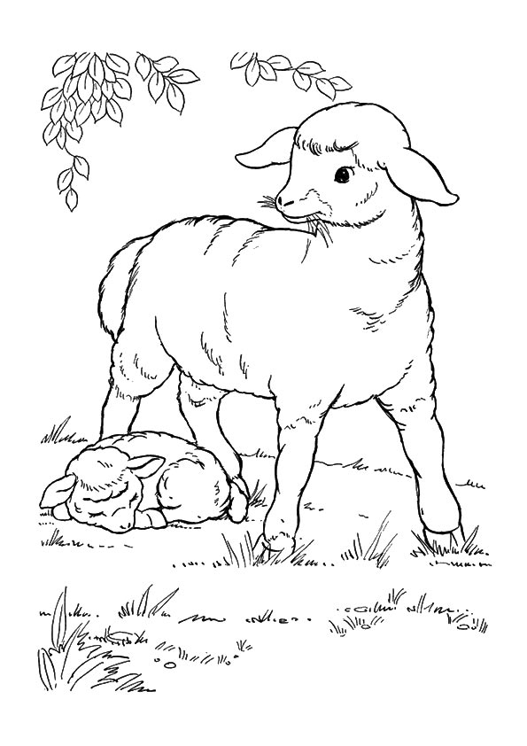 A-Sheep-Coloring-planse-desene