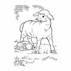 A-Sheep-Coloring-planse-desene
