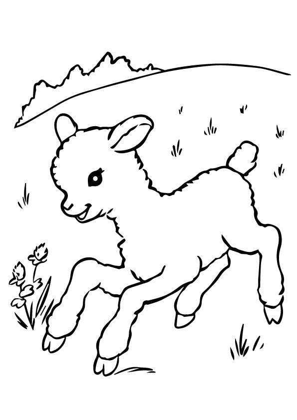 A-Sheep-Coloring-run