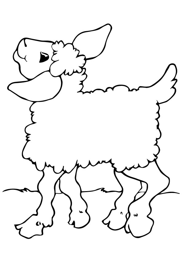 A-Sheep-Coloring-see