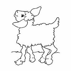 A-Sheep-Coloring-see