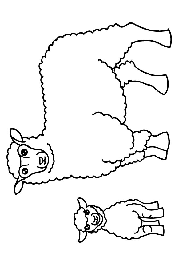 A-Sheep-Coloring-small