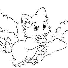 A-Very-Cute-Fox-16