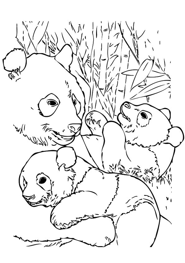 A-cute-baby-panda-coloring-pages