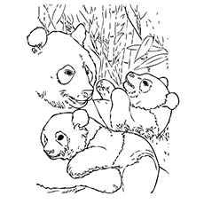 a cute baby panda coloring pages