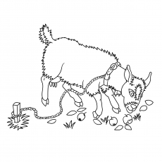 A Goat Coloring Page Fri