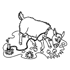 Goat Coloring Page Fri