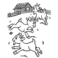 goats in pasture coloring pages