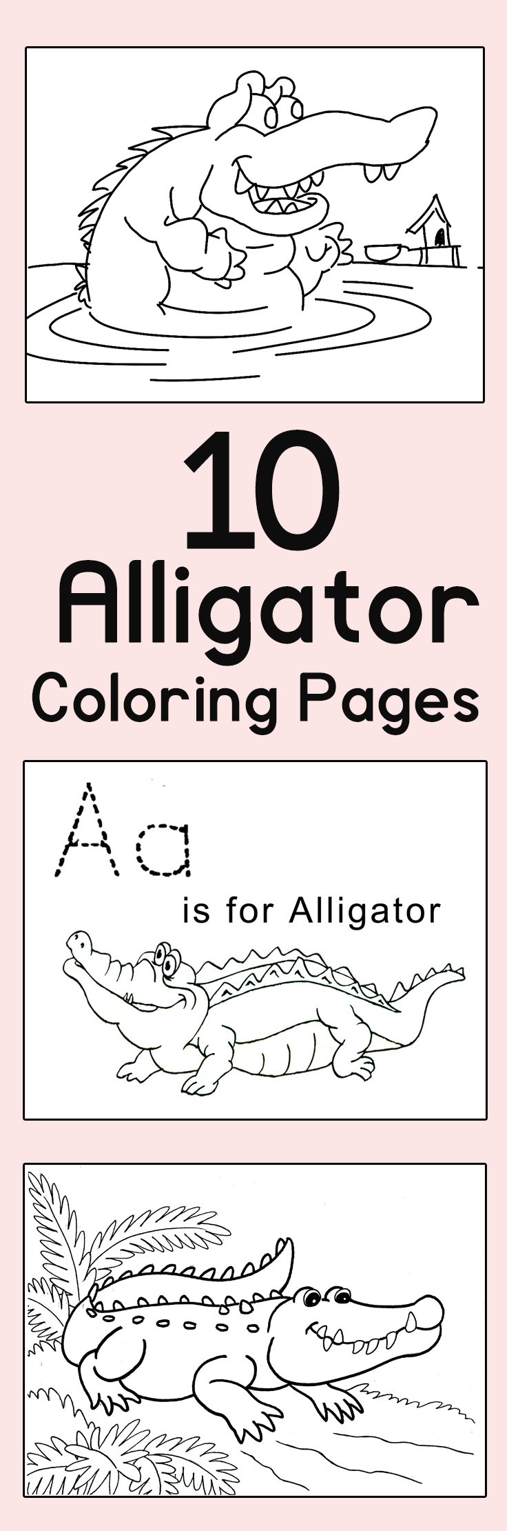 Free coloring pages alligator - Free Coloring Pages Alligator 51