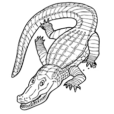 Animals-Alligator-Coloring-Page