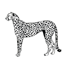 Top 25 Leopard Coloring Pages For Your Toddler