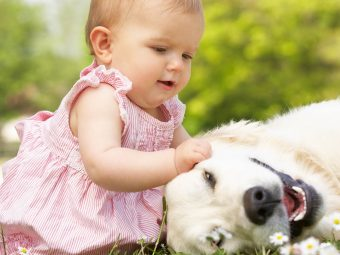 Dog Allergy In Babies: Symptoms, Causes, Treatment And Prevention