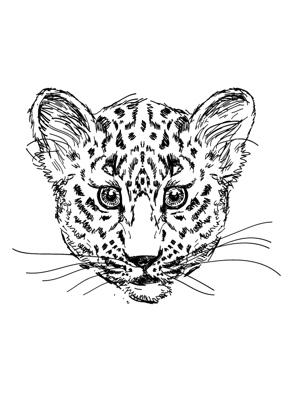 Drawn-Cheetah