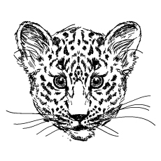 Beautiful Drawn Cheetah