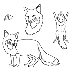 Fox-16 for coloring images