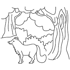 Fox In Forest 16 For Coloring Pages