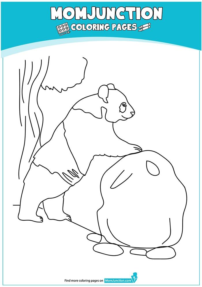 Giant-Panda-Bear-17