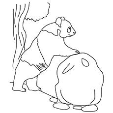 Giant Panda Bear 17