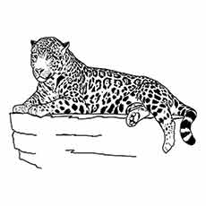 Jaguar-Laying