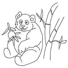 Panda Bear Eating Bamboo 17