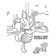 Piglet-16