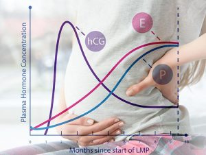 Progesterone During Pregnancy: What Happens If Its Level Is High Or Too Low?